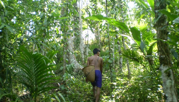 Forest diversity: Living ecosystem of the earth
