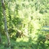 Nature and Forest in our Service