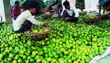 Lemon of Manikganj in the world market