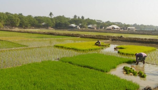 Excessive soil salinity forced farmers back to agriculture in coastal areas