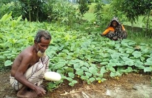 The green initiative of old couple in Haor area