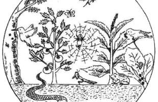 Biodiversity and productivity