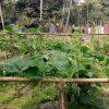 Mamun Mian transforms his house as nutrition bank (Shoto Bari)